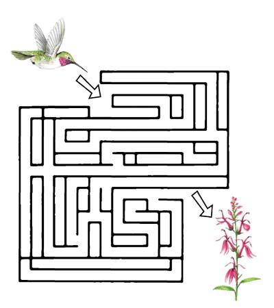 El colibrí en busca de las flores. Teby y Tib - Portal Infantil